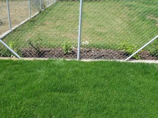 Srovnání trávníku se závlahou (dole) a bez ní (nahoře)